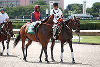 BecauseI'mWorthIt on post parade for the running of the Bob Umphrey Turf Sprint Stakes, Calder Race Course, Miami Gardens Florida. 07-07-2012.  Arron Haggart/Eclipse Sportswire.
