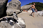 African Penguins & People