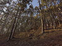 FOREST_LOCATION_90040