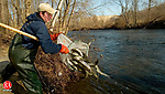 TORRINGTON, CT- 03 APRIL 2008 --040308JS01--Chris Papsin, a seasonal worker for the Department of Envrionmental Protection, dump a batch of trout into the Naugatuck River at a location off South Main Street in Torrington on Thursday. The group stocked more than 3000 fish in the river at various locations on Thursday. Prior to opening day of the fishing season they will stock 375,000 to 400,000 fish statewide and more than 700,000 by the end of the year.<br /> Jim Shannon / Republican-American