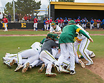 The Bishop Manogue team dog piles as they celebrate their win over Reno in the NIAA 4A Northern Regional Baseball Championship at Galena High School in Reno, Nevada on Saturday, May 12, 2018.