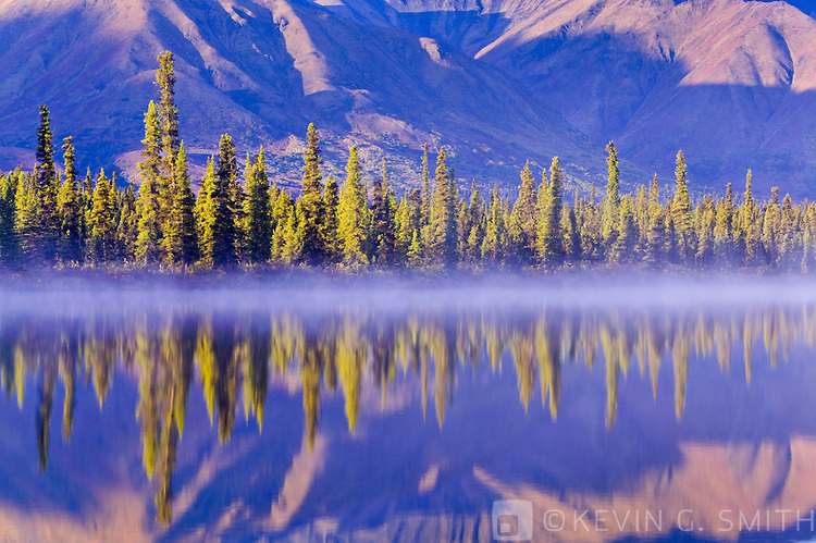 Trees reflected in Drasher Lake at sunrise, Denali Highway, fall Alaska, USA