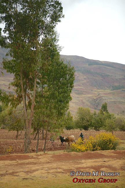 Farm Scenic