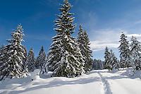 Deutschland, Bayern, Chiemgau: Schneelandschaft auf der Winklmoosalm - Geburtsort der Rosi Mittermaier (Olympiasiegerin im Abfahrtslauf und Slalom 1976 in Innsbruck) | Germany, Bavaria, Chiemgau: winter landscape at Winklmoosalm