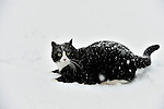 Spooky the cat in the snow January 09