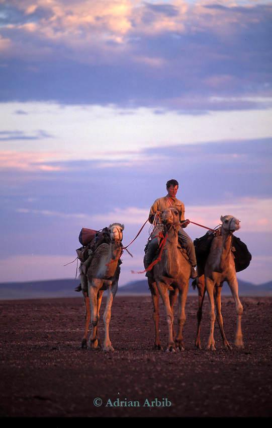 Benedict Allen and his team of camels negotiate part of Damaraland   on his journey along the Skeleton coast of Namibia from South Africa to Angola.