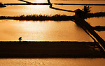 A worker is perfectly reflected in the clear water of flooded paddy fields.  Equipped with spades, workers stand atop banks which are made to retain the water so rice can grow, flourishing in the flooded soils.<br /> <br /> Amateur photographer Ali Acar took pictures of them over a five year period near his home in Tosya, Turkey.  SEE OUR COPY FOR DETAILS.<br /> <br /> Please byline: Ali Acar/Solent News<br /> <br /> © Ali Acar/Solent News & Photo Agency<br /> UK +44 (0) 2380 458800