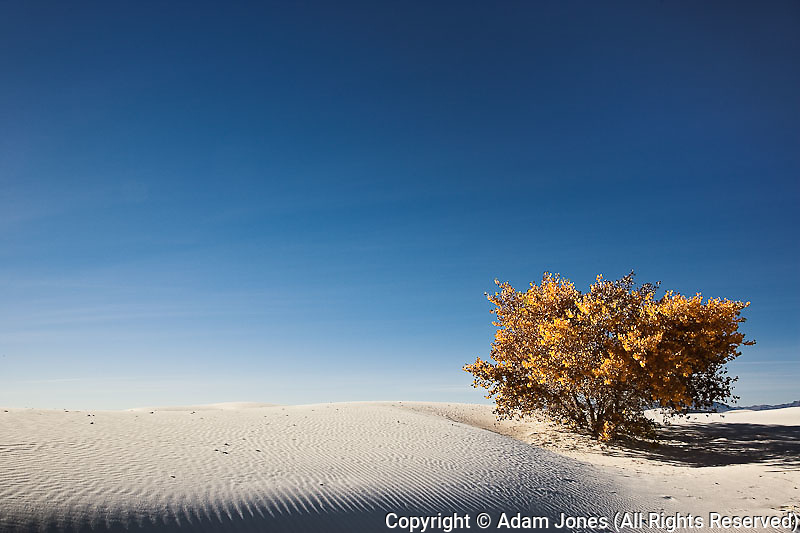 Autumn foliage among the dunes, White Sands National Monument, New Mexico