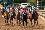 November 2, 2019: Spun to Run, ridden by Irad Ortiz Jr., wins the Big Ass Fans Breeders' Cup Dirt Mile on Breeders' Cup World Championship Saturday at Santa Anita Park on November 2, 2019: in Arcadia, California. Michael McInally/Eclipse Sportswire/CSM