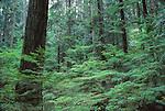 Forest at Lynn Creek