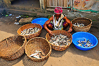 Nigeria - Fishmonger sorting fish based on size