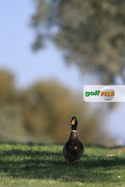 Duck on the 3rd on Day 3 of the 2012 Open de Andalucia Costa del Sol at Aloha Golf Club, Marbella, Spain...(Photo Jenny Matthews/www.golffile.ie)