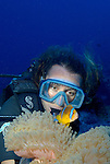 Orange fin clownfish, anemone fish, Amphiprion chrysopterusm, close up with diver