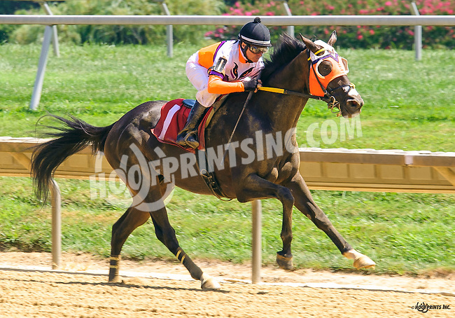 Corporate Measure winning at Delaware Park on 8/15/16
