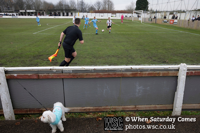 Atherton Collieries 1, Boston United 0, 23/11/19. Alder House, FA Trophy, third qualifying round. A dog amongst the crowd during the first-half as Atherton Collieries played Boston United in the FA Trophy third qualifying round at the Skuna Stadium. The home club were formed in 1916 and having secured three promotions in five season played in the Northern Premier League premier division. This was the furthest they had progressed in the FA Trophy and defeated their rivals from the National League North by 1-0, Mike Brewster scoring a late winner watched by a crowd of 303 spectators. Photo by Colin McPherson.