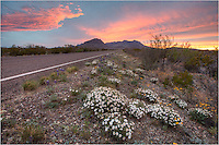 Along the road facing west towards the Chisos Mountains, Texas wildflowers can be seen blooming each spring. I was fortunate on this spring evening as the sunset let up the clouds in this Big Bend National Park image.