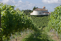 Vignoble des Landes / Landes Vineyard