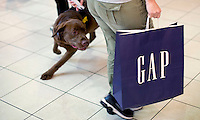 "UNITED STATES - APRIL 5: As part of the training, the dogs are tested in real world environments, like shopping malls. The cream of the crop are selected for the ""Vapor Wake Detection"" program. They are standard explosives detection canine dog, but with additional abilities and training to detect carried or body-worn explosives. The dogs can detect the plume of air coming off a person and what they are carrying as they pass through a crowd. This is a very specialized and unique skill set, and has only been developed since the terrorist attacks of 9/11."