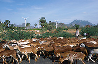 INDIA, Tamil Nadu, Kanyakumari, Cape Comorin, Muppandal, windfarm with wind turbine, goats on the road / INDIEN Kanniyakumari, Kap Komorin, Windpark mit Windkraftanlagen, Ziegenherde auf Strasse