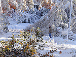 A resident of Cemetery Road in Vernon surveys the damage of trees and power lines that completed blocked the road, after the the record breaking snow storm brought down trees and utility wires leaving more than 700, 000 CL+P customers in the dark, Sunday, October 30, 2011. (Jim Michaud/Journal Inquirer).