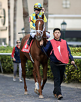 HALLANDALE BEACH, FL - JAN 06: Flameaway #1 with Julien Leparoux in the irons being led from the paddock to the field on the way to winning The $100,000 Kitten's Joy Stakes for trainer Mark E. Casse at Gulfstream Park on January 6, 2018 in Hallandale Beach, Florida. (Photo by Bob Aaron/Eclipse Sportswire/Getty Images)