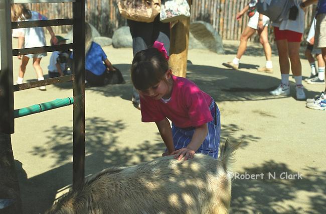 Girl at petting zoo