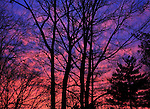 A Blazing Sunset Behind Silhouetted Leafless Trees In Winter Time, Southwestern Ohio