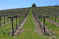Vineyard, Murphys, California, USA, 201304211730<br /> <br /> Copyright Image from Victor Patterson, 54 Dorchester Park, Belfast, UK, BT9 6RJ<br /> <br /> Tel: +44 28 9066 1296<br /> Mob: +44 7802 353836<br /> Voicemail +44 20 8816 7153<br /> Skype: victorpattersonbelfast<br /> Email: victorpatterson@me.com<br /> Email: victorpatterson@ireland.com (back-up)<br /> <br /> IMPORTANT: If you wish to use this image or any other of my images please go to www.victorpatterson.com and click on the Terms &amp; Conditions. Then contact me by email or phone with the reference number(s) of the image(s) concerned.