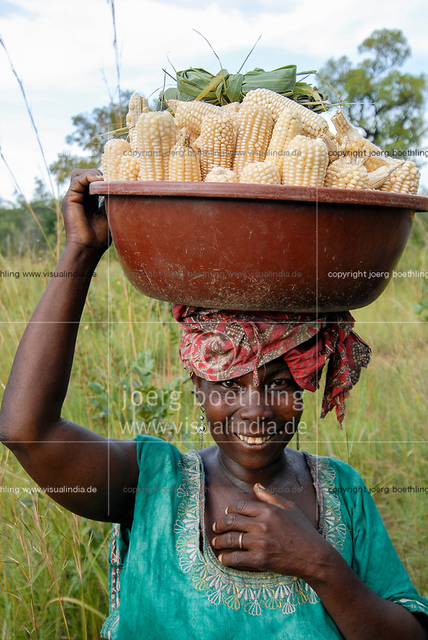 MALI, Bougouni, woman carry maize crop after harvest from field to her home
