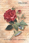 Isabella, FLOWERS, paintings, red roses, letter(ITKE021855,#F#)