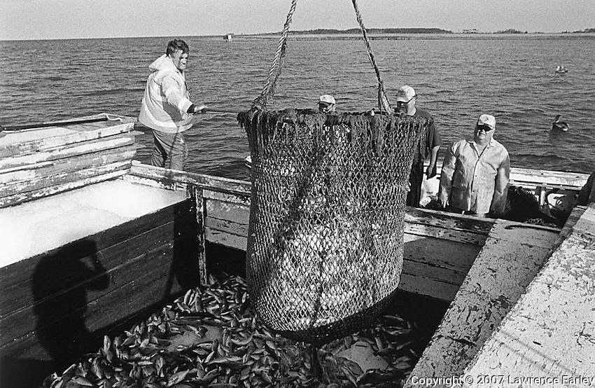 At the end of the long-haul fishing operation a fisherman uses a dip net on the runboat to transfer the fish from his nets to the runboat.  The runboat will then return to the fish house with the fish where they are sorted, boxed and shipped.