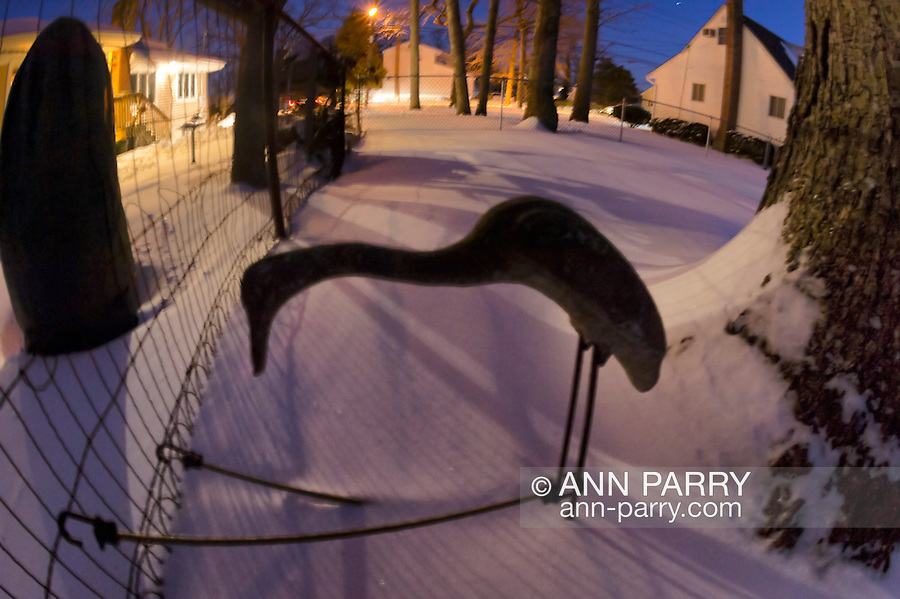 Feb. 9, 2013  Merrick, New York, U.S. - The evening after Blizzard Nemo hits Long Island South Shore communities, home backyards are blanketed in snow. A crane yard statue was tethered to fence to keep it secure during the high winds. (180 degree fisheye lens view)