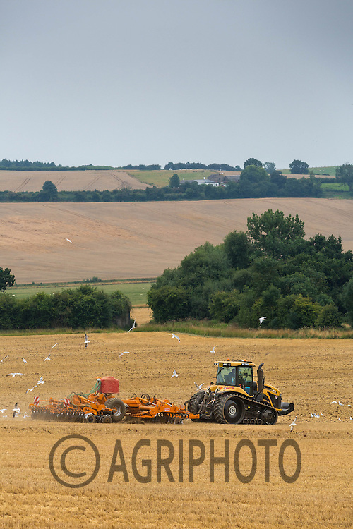 Cat Challenger drilling oilseed rape in a rolling landscape<br /> Picture Tim Scrivener 07850 303986
