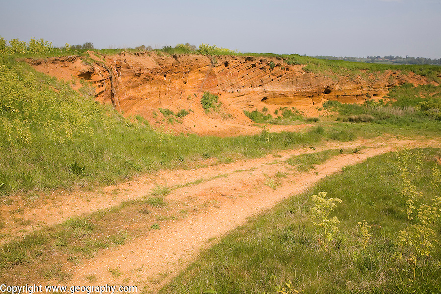 Red crag rock exposed at Buckanay Pit quarry, Alderton, Suffolk, England
