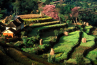 Terraced fields with houses, in spring, Kathmandu, Nepal.