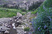 Mountain stream and wildflowers Yankee Boy Basin,Mountain Bluebells,Tall fringed Bluebells,Mertensia ciliata, Monkeyflower,Ouray, San Juan Mountains, Rocky Mountains, Colorado, USA