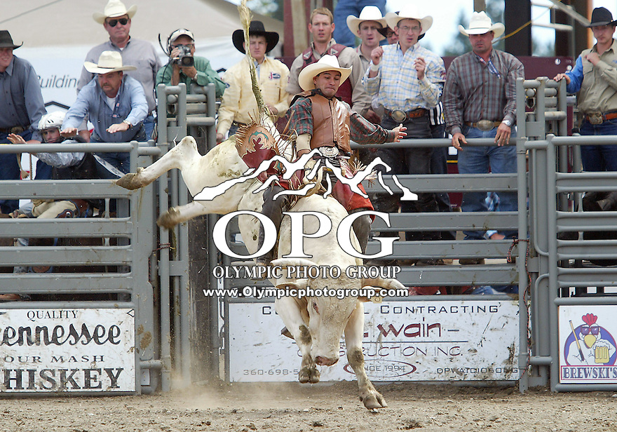 28 August 2005: Myron Duarte riding the bull Kady Did holds on during the Extreme Bulls competition Sunday at the Kitsap County Fair Grounds, Duarte was not able to hold on for 8 seconds during the first round of competition in Bremerton, WA.