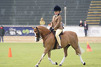 Champion Hunter Pony NE 12.2hh