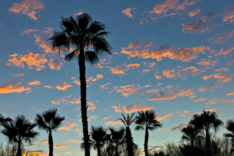 Palm trees and sunrise. Palm Desert, California