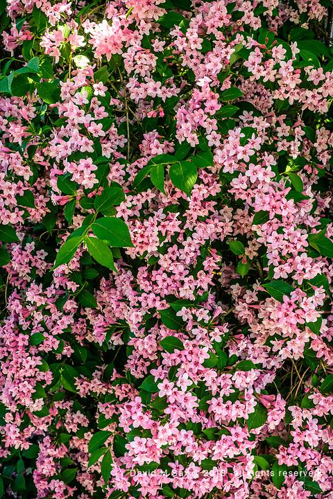 5.21.17 - Flower Blanket...