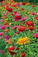 Summer Wildflowers, Shamong, New Jersey