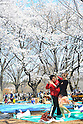 Tokyo, Japan - April 8: A man and woman danced under Cherry trees as their flowers in full bloom at Yoyogi Park, Shibuya, Tokyo, Japan on April 8, 2012. Many people visited the park for Hanami parties, or parties under cherry blossoms, at the park and enjoyed the flowers and fair weather.