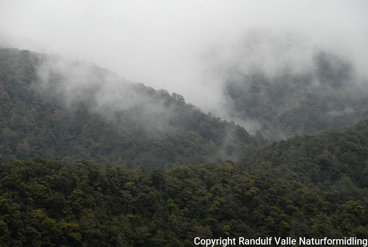Tåke i skog ---- Mist in forest