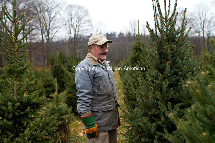 SOUTHBURY, CT, 01 December, 2015 - 12015LW04 - Ben Stiles inspects his trees at Ragland Farm in Southbury Tuesday.<br />