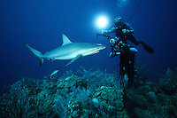 Cameramen use the latest in high-technology to film marine wildlife, Caribbean, Atlantic Ocean