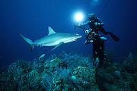 Cameramen use the latest in high-technology to film marine wildlife, Caribbean, Atlantic Ocean