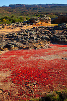 Red mosses Cedarberg Wilderness, South Africa  UNESCO World Heritage Site   Northern Cape Area