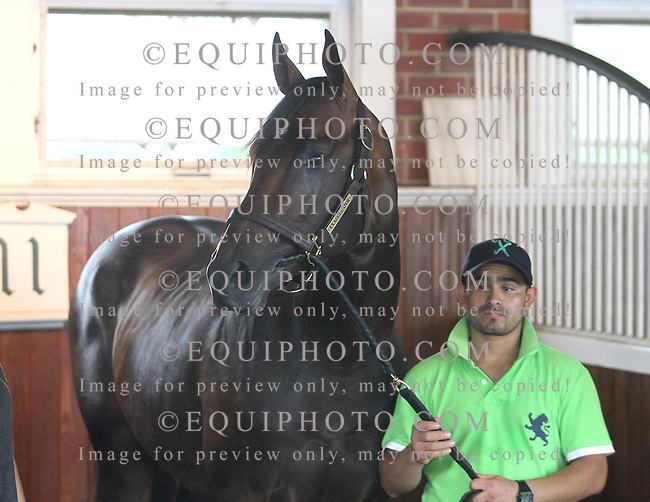 Preakness Winner Exaggerator stands in the saddling enclosure on Saturday afternoon July 30, 2016 as he prepares for a rematch with Kentucky Derby Winner Nyquist in the $1,000,000 Grade 1 betfair.com Haskell Invitational at Monmouth Park in Oceanport, New Jersey on Sunday July 31, 2016. Photo By Ryan Denver/EQUI-PHOTO