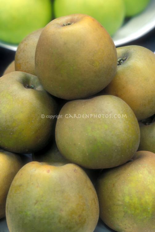 Apple 'Golden Russet' Malus domestica fruit dessert apples, heirloom apple variety, antique apple