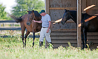Old Friends (farm) near Lexington, Kentucky 2012